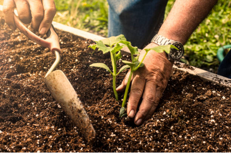 plantation jardin potager